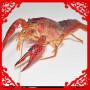 澳洲淡水小龙虾_澳洲淡水小龙虾价格_澳洲淡水小龙虾图片_列表网