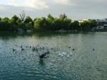 星湖园温泉度假村
