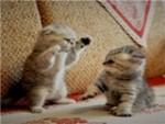 唯宠依人猫舍