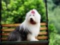 钦州宠物领养中心