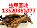 回收冬蟲夏草燕窩海參魚翅魚肚瑤柱5x極草