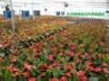北京专业绿植租赁服务公司