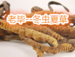 老毕-冬虫夏草