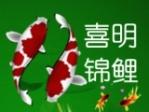 河南喜明锦鲤养殖合作社