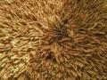 高价回收5x极草冬虫夏草含片回收虫草