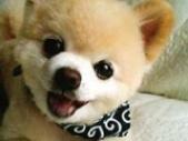 狗场解散小狗五百起售