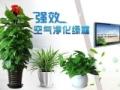 黄浦区绿植租赁