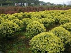 绿香源园艺知识
