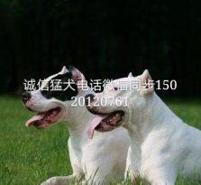 权威认证,名犬养殖基地 可以让你挑选一个一生最忠实的朋友