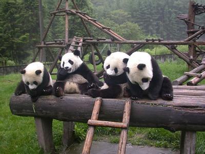 碧峰峡野生动物园【雅安】