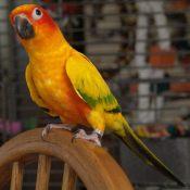 金太阳鹦鹉2