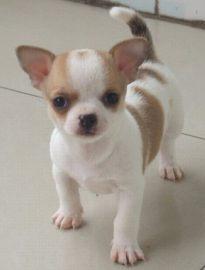 宁波宠物狗领养中心 只需身份证实名领养