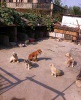 上海宠物领养中心