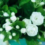 室内常养9种鲜花容易引起疾病