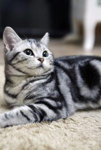 欧帝亿猫粮怎么样 选猫粮要注意的要点