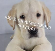 北京名犬养殖基地,直销各类名犬,一条也优惠,包健康送用品