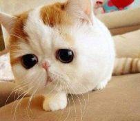 高窦猫罐头怎么样 如何能为猫