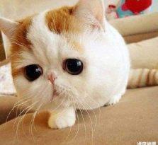 高窦猫罐头怎么样 如何能为猫罐头保鲜