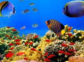 免费上门设计海鲜池。专业定做壁挂鱼缸,鱼缸维修。