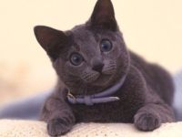 猫咪怎么养 小猫的正确饲养方法及注意什么