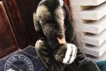 新款100%羊毛羊剪绒