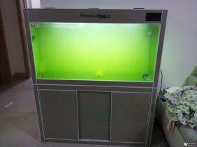 专业治疗各种鱼病 鱼缸清洗维护