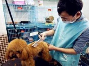 宠物急诊中心