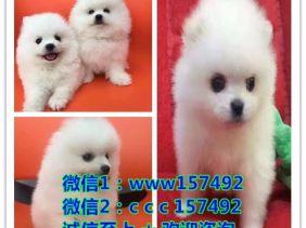 广州宠物救助中心