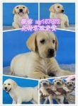 合肥流浪狗领养中心 合肥犬舍排行榜 合肥出售宠物狗