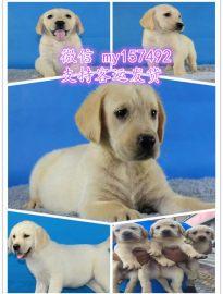 六安宠物领养中心地址 六安出售宠物狗 六安犬舍排行榜