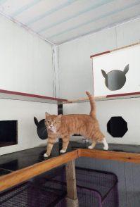 西苑专业寄养猫猫狗狗 常年寄养 养老 可上门接送宠物