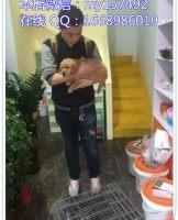 宠物领养8