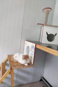 玉泉路家庭宠物寄养猫猫狗狗自由散养 老年宠物看护可接