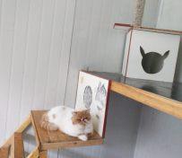 玉泉路家庭宠物寄养猫猫狗狗自