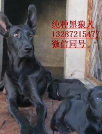 黑狼犬多少钱有一只