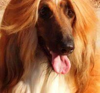 宠物狗 (4)