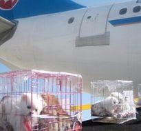 国际宠物托运