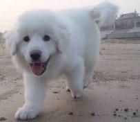 武汉官方认证宠物领养中心 现