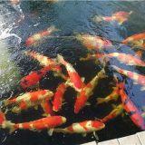 观赏鱼鱼缸的容量该如何判断