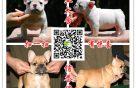 犬舍出售各类品种的狗狗,加微信有优惠,包健康纯种