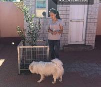 北京宠物寄养中型犬专业寄养