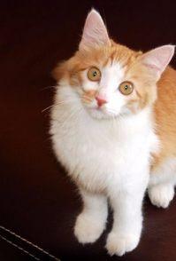 怎么给猫猫洗澡 给猫洗澡水温不能太低或太高