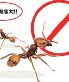 深圳澳华蚂蚁防治