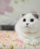 宠物猫出售