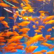 鱼缸清洗3