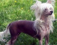 是什么造成狗狗出现黑眼圈,怎样驱除呢?