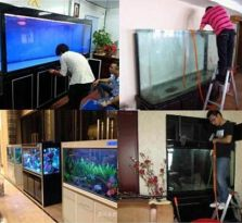 南京鱼缸清洗,护理,维修,搬运服务