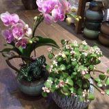 上海园艺、商场专业绿植租摆、花卉租赁、绿化养护