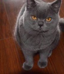 猫吃猫粮好吗 选择猫粮上应该注意哪些