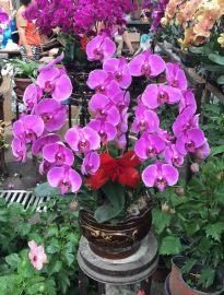 哈尔滨平房年宵花卉优惠预订哈尔滨专业绿植基地